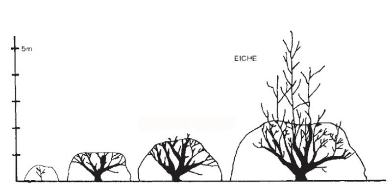 Eichen