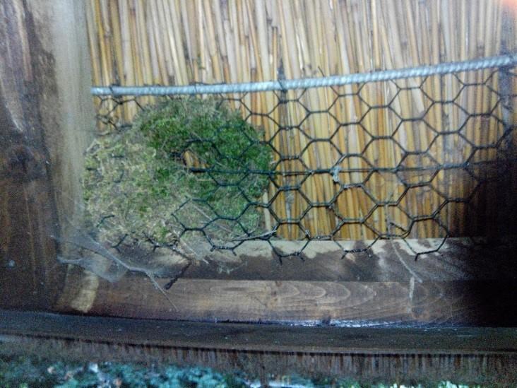 Nest des Zaunkönigs in einer Blitzschutzhütte