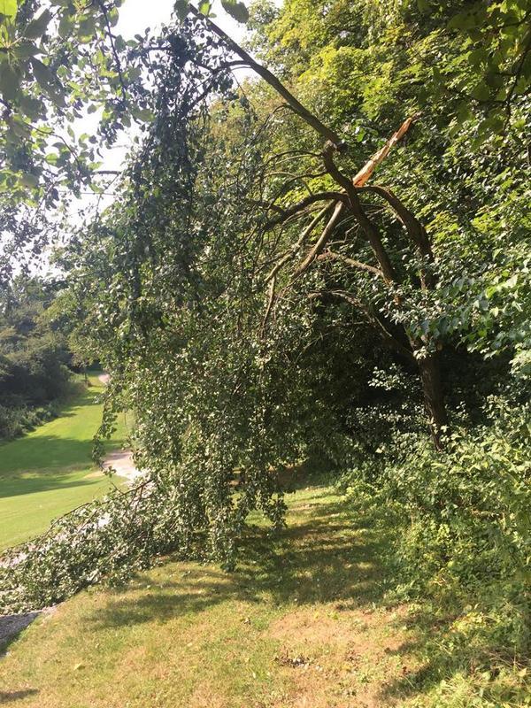 Grünastbruch an einem Obstbaum an Fairway 17 Westplatz
